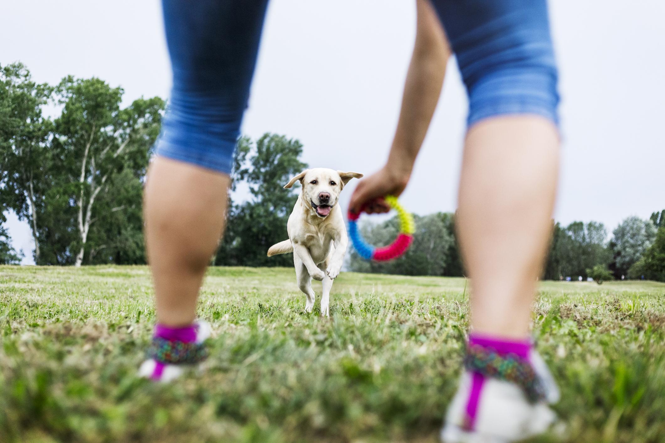 Lär dig och din hund freestyle