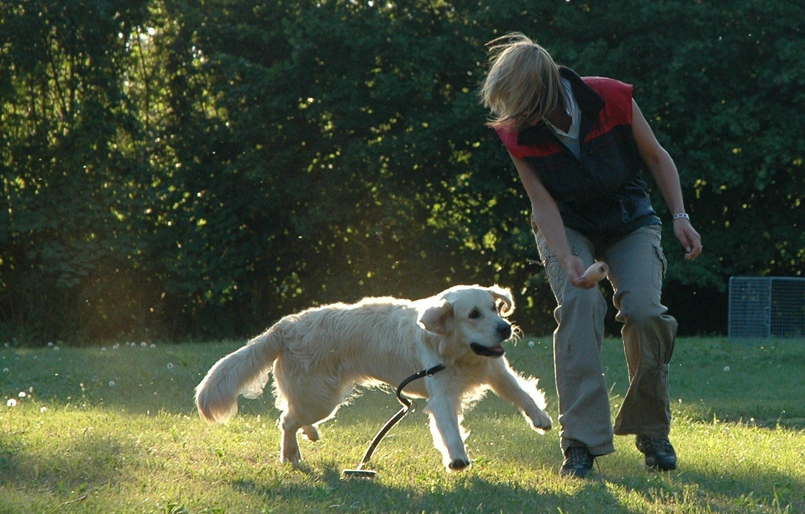 Träna freestyle med din hund