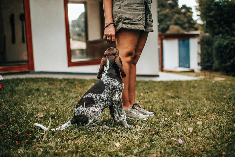 Varför är hundfreestyle bra för det mentala?