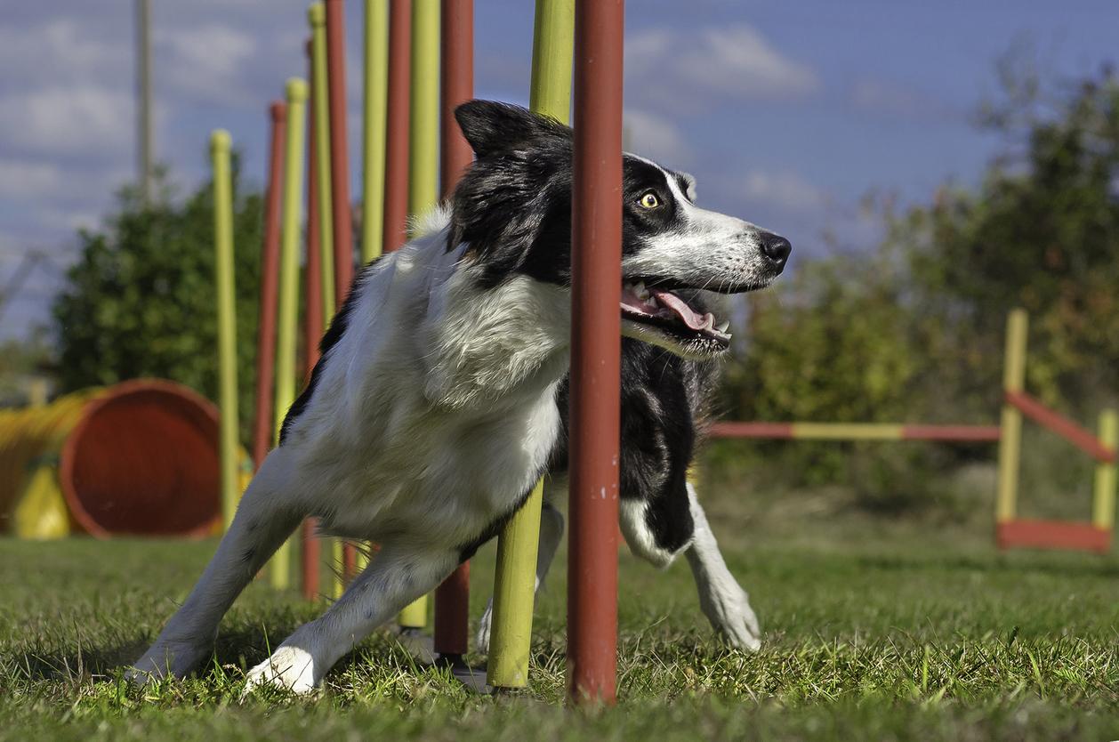 Freestyle – en hundsport