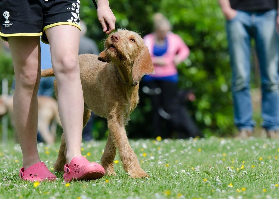 Genomgång av hundfreestyle som sportgren