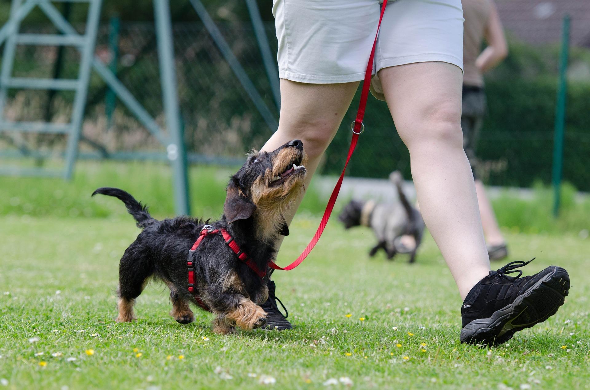 Hundfreestyle – ett av flera sätt att aktivera din hund